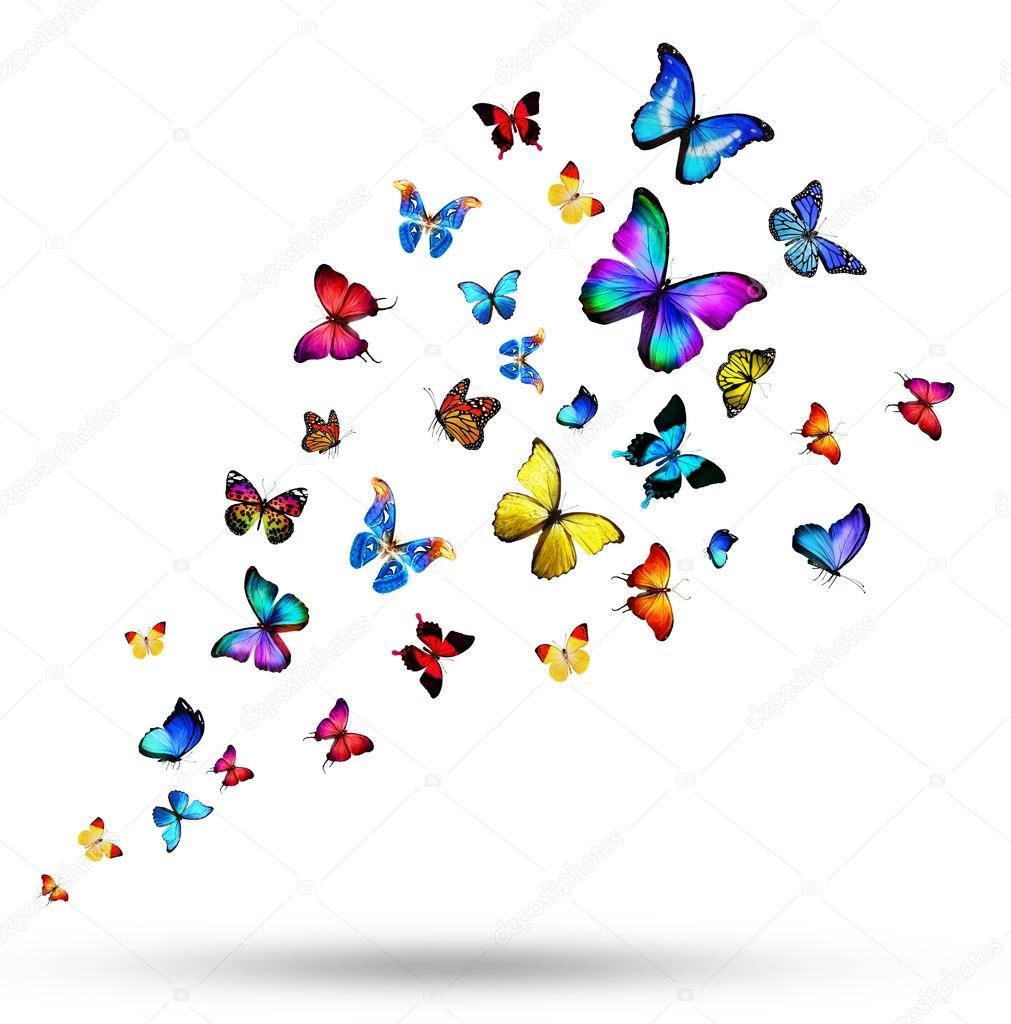 Stormo di farfalle colorate foto stock sun tiger 56991703 for Foto farfalle colorate