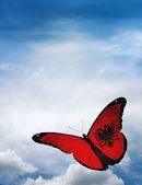 Fotografie Albania flag butterfly