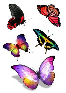 Flock of colorful butterflies