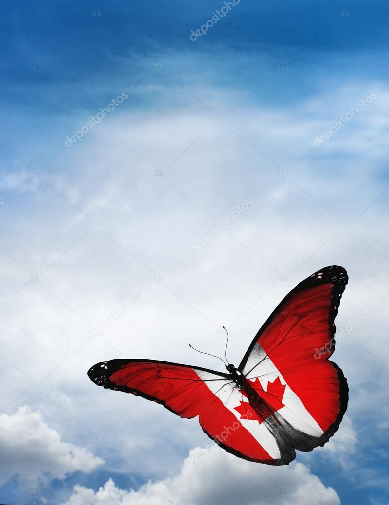 canada flag butterfly u2014 stock photo sun tiger 57323047