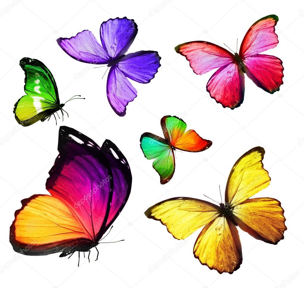 Stormo di farfalle colorate foto stock sun tiger 57323347 for Immagini di pareti colorate