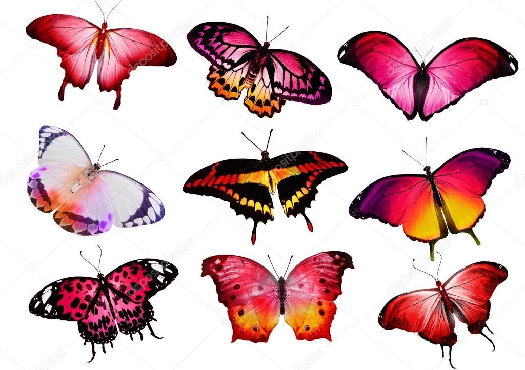 Farfalle colorate foto stock sun tiger 57549983 for Foto farfalle colorate