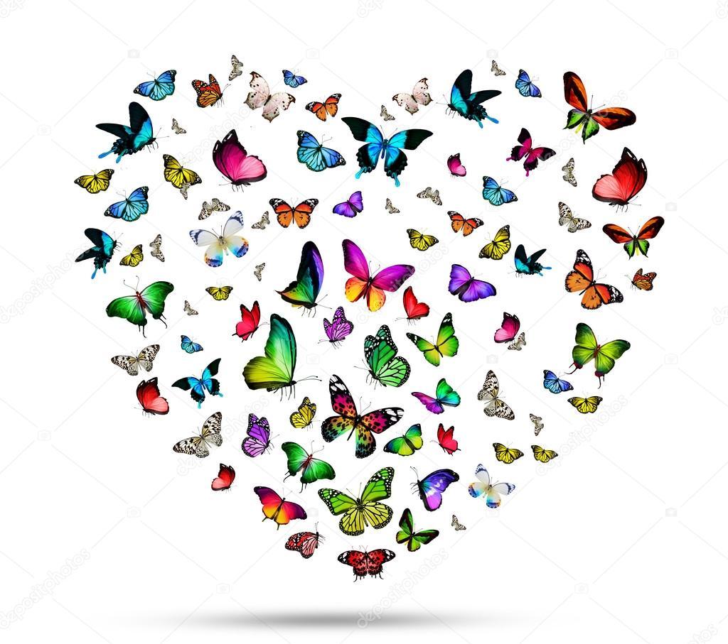 Stormo di farfalle colorate foto stock sun tiger 57687897 for Foto di ville colorate