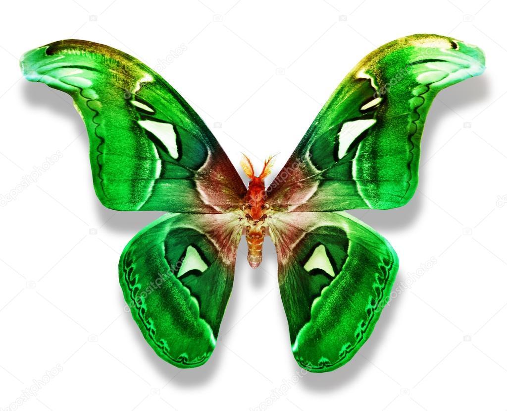 Dibujos Mariposas Con Lapices De Colores Mariposa De Color Verde