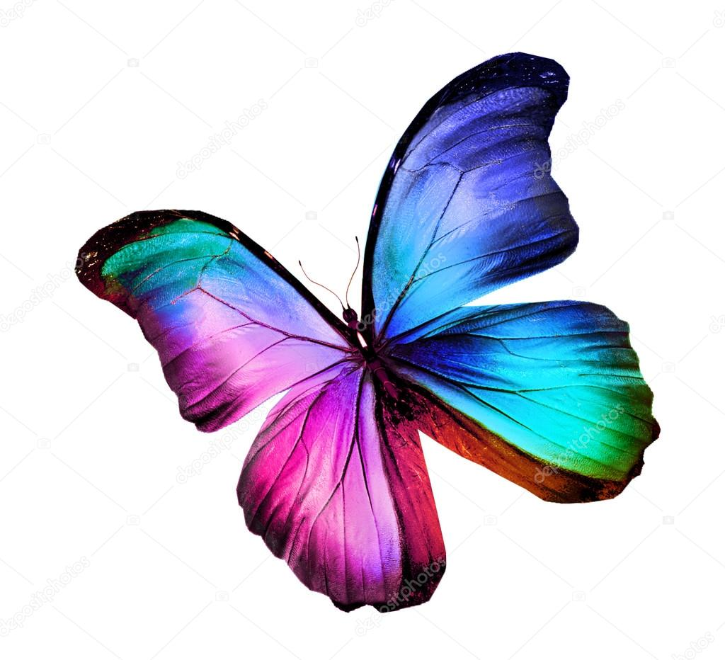 Colorful butterfly — Stock Photo © sun_tiger #58071963