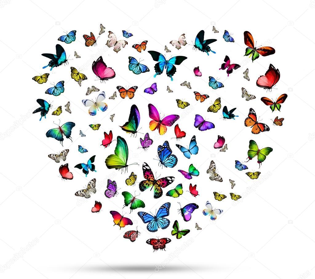 Stormo di farfalle colorate foto stock sun tiger 59108993 for Foto farfalle colorate