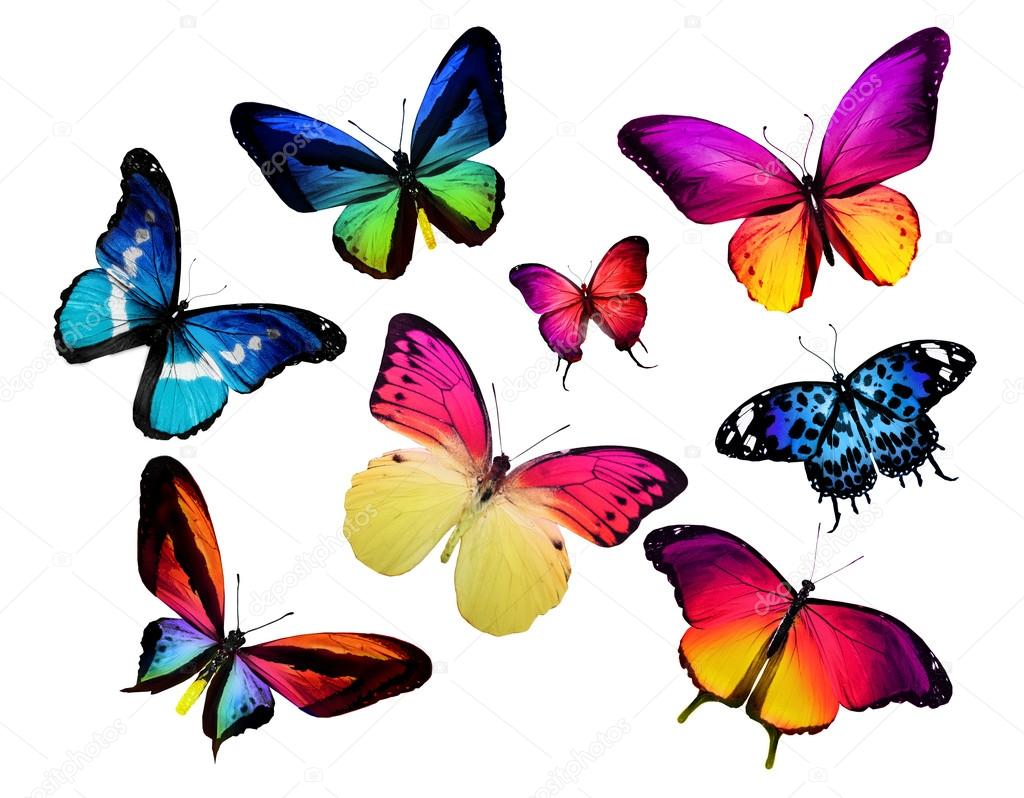 Colorful butterflies — Stock Photo © sun_tiger #59557139