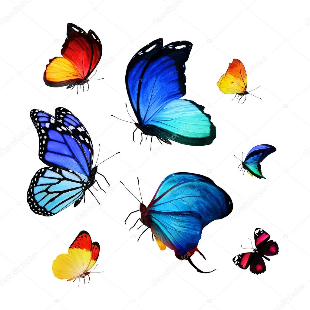 Flock of colorful butterflies — Stock Photo © sun_tiger #59966399