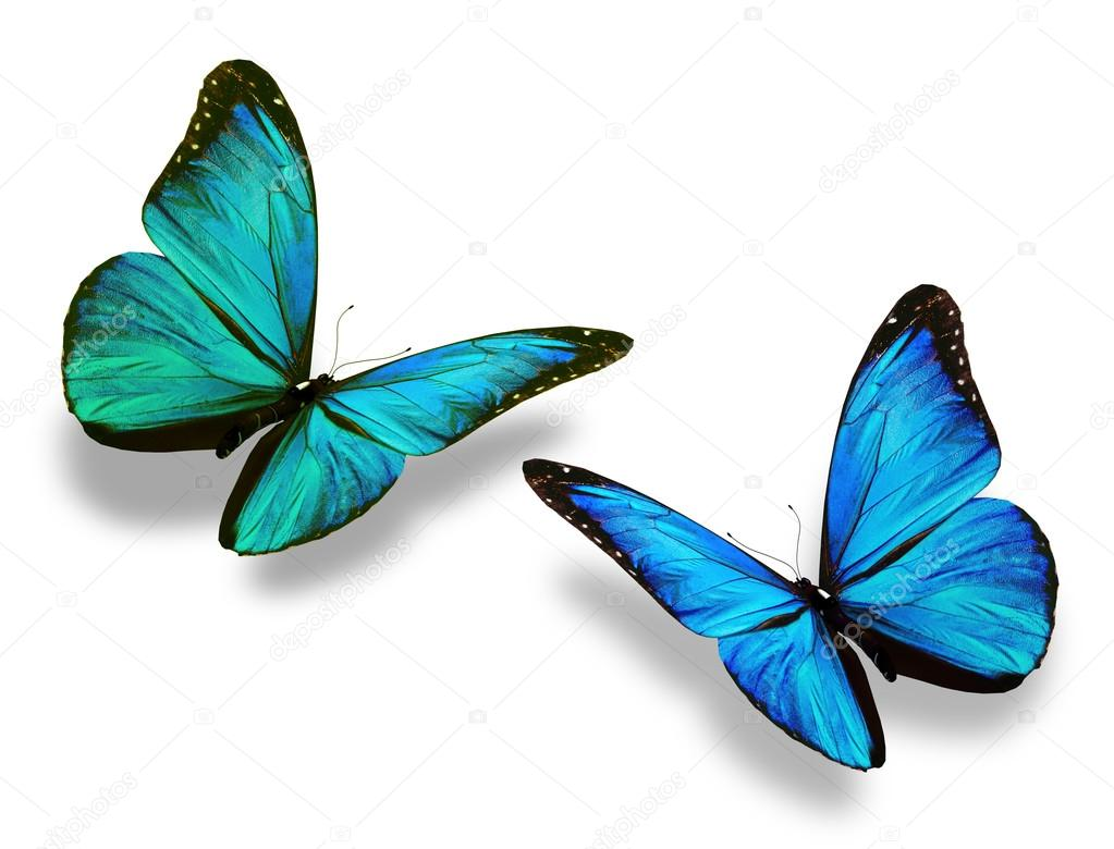 Two colorful butterflies — Stock Photo © sun_tiger #60198859