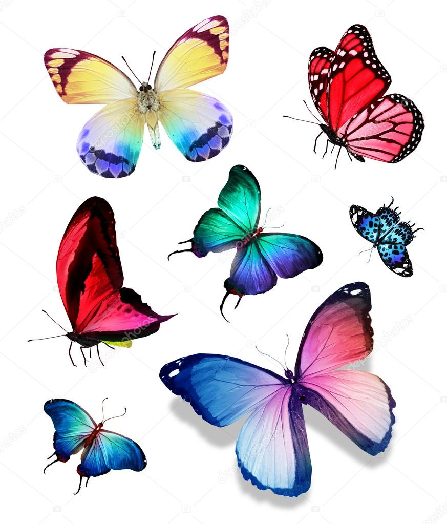 Tropical colorful butterflies — Stock Photo © sun_tiger #64244179