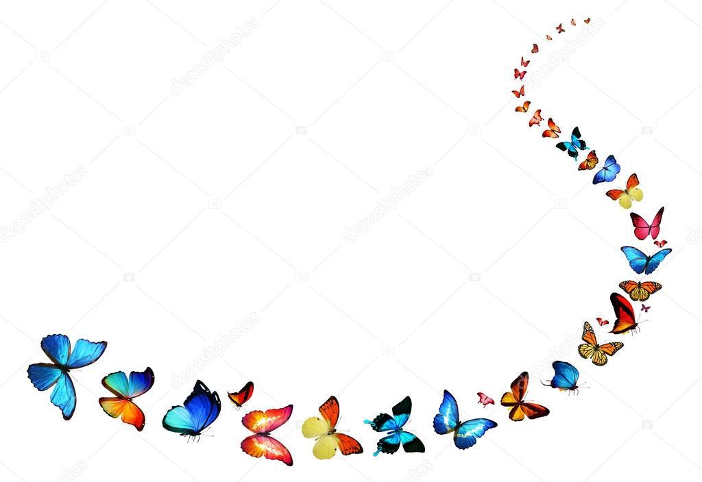 Línea de vuelo de las mariposas de color — Fotos de Stock ...