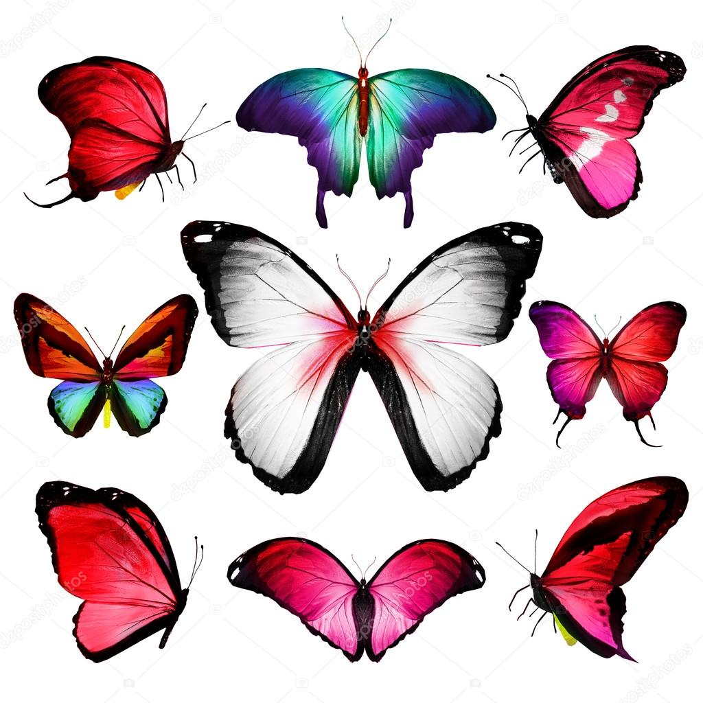 Tropical colorful butterflies — Stock Photo © sun_tiger #66193363