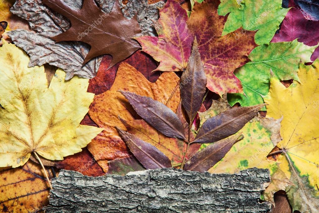 Colorful autumn leaves and tree bark