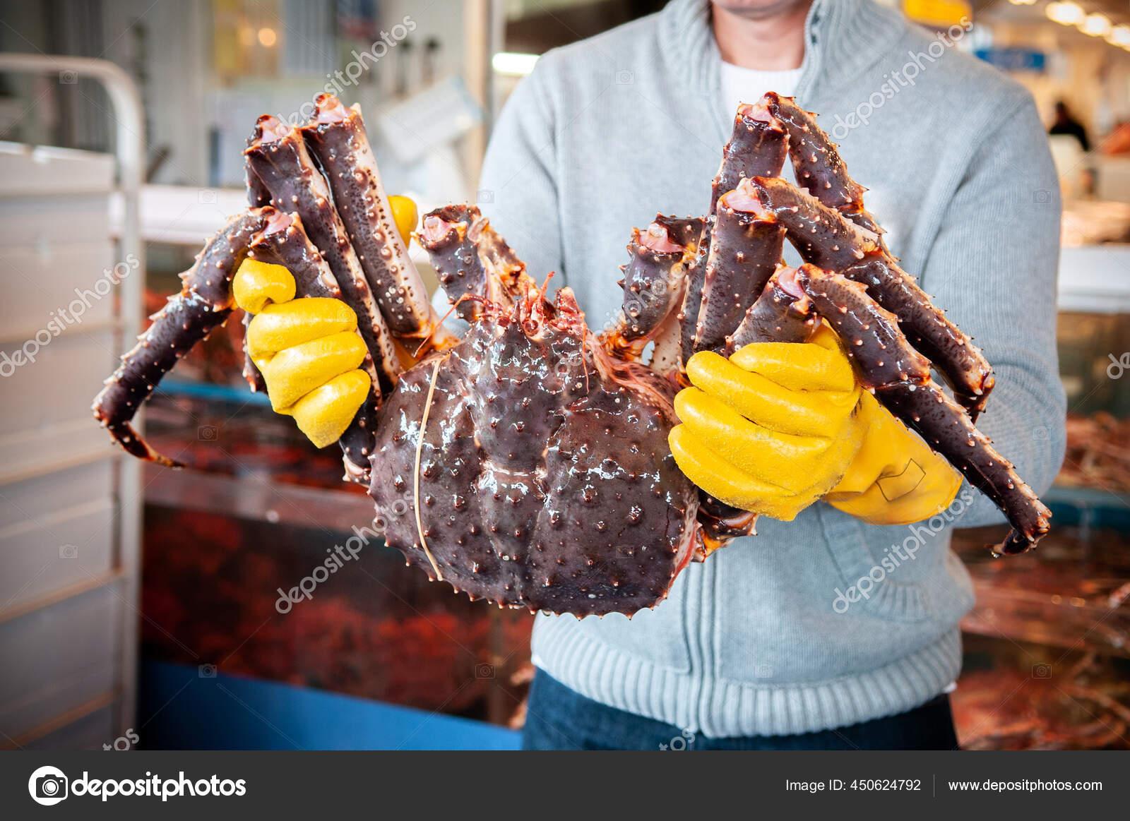 Japanese King Crab Stok Foto Japanese King Crab Gambar Bebas Royalti Depositphotos