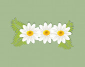 White breeze Shasta daisy flower flowers greetings card holidays vector image banner template graphic design business card