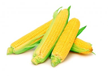 Four ripe corn on the cob with green leaves (isolated)