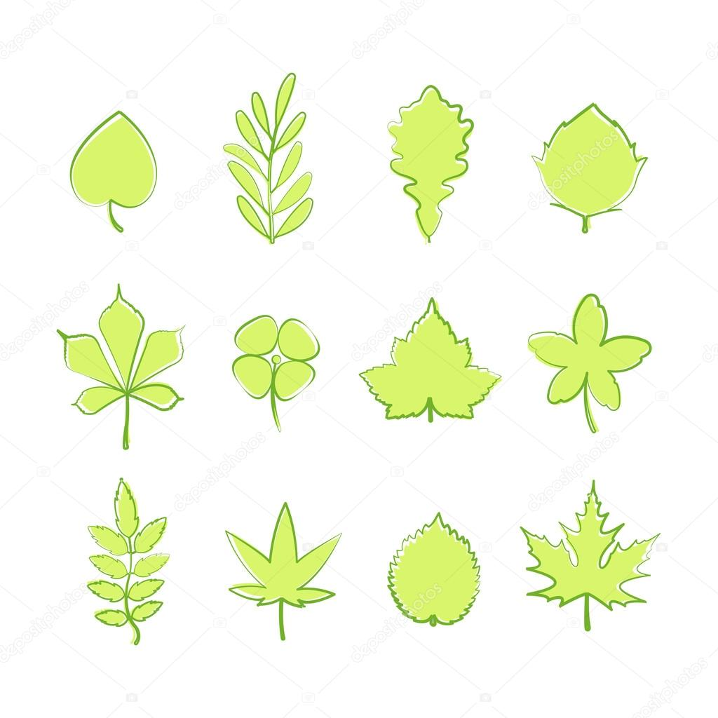 set of green tree leaf icons isolated on white background. vector nature symbols