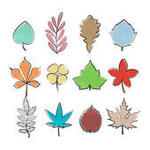 Set of colorful, hand drawn leaf icons isolated on white background. vector leaves logo collection. thin line contour, seasonal design elements. natural plant symbol