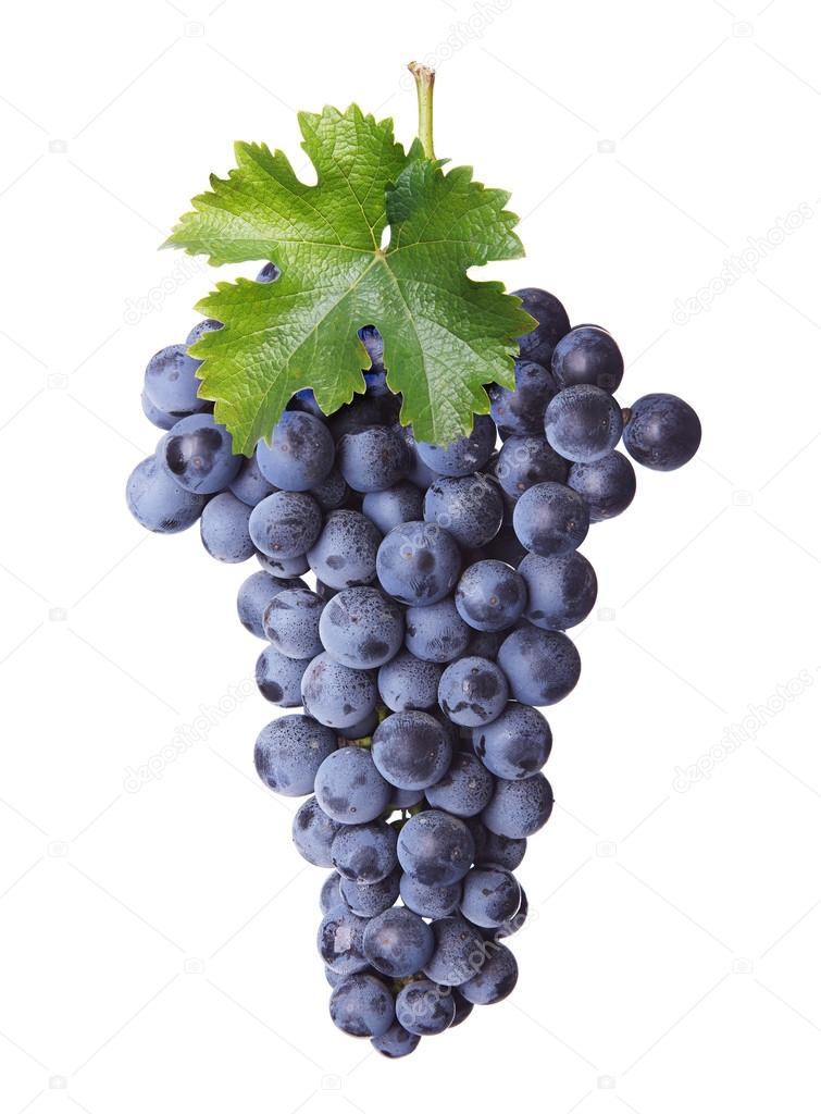 Fresh bunch of red wine