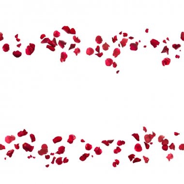 Repeatable, hovering red rose petal lines, studio photographed and isolated on white stock vector