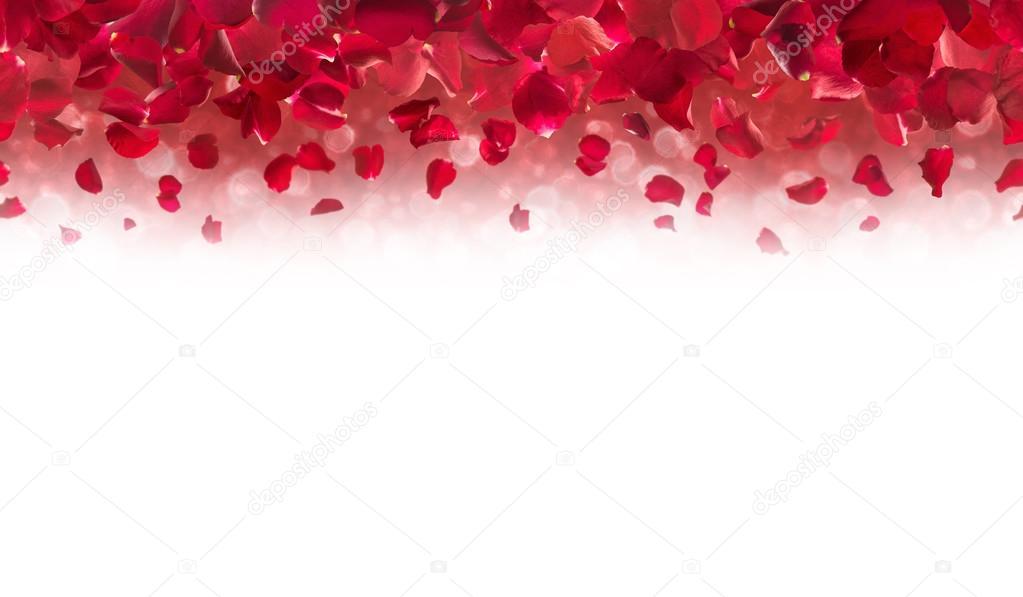 red rose petals top border stock photo designnatures 98923274