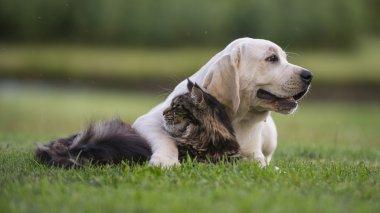 Dog cat owner