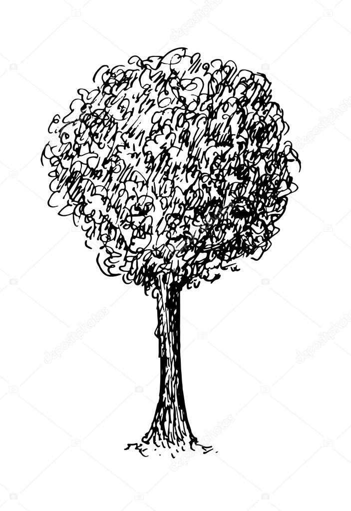Croquis Noir Et Blanc D Un Arbre Illustration Vectorielle