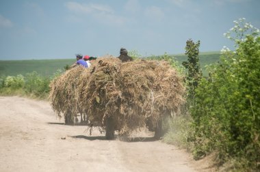 Carts with hay on dirt road