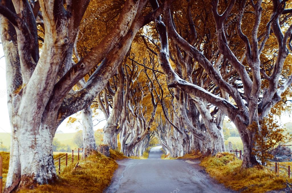 majestic tree alley