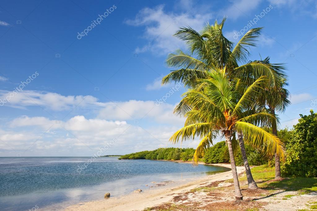 Palm Trees Ocean And Blue Sky On A Tropical Beach In Florida Keys Stock