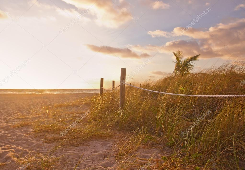 Path to the beach with Sea Oats, grass dunes at sunrise or sunset in Miami Beach, Florida