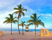 Hollywood Beach Florida palm trees on the beach
