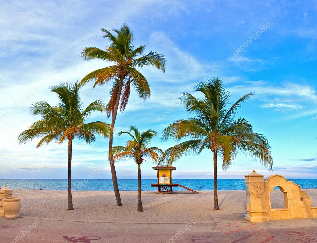 Hollywood Beach Florida Palm Trees On The Beach Stockfoto