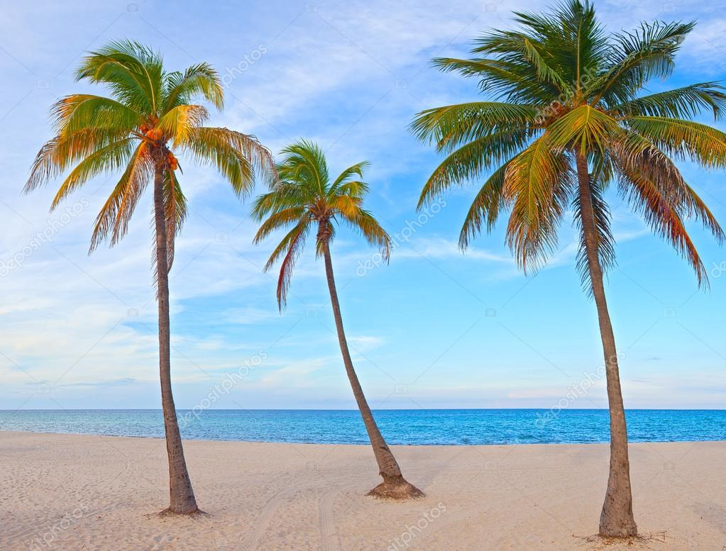 Miami Florida Palm Trees On The Beach Stock Photo Fotozapad