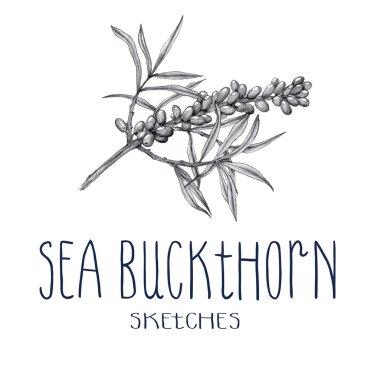 Hand drawn sea buckthorn