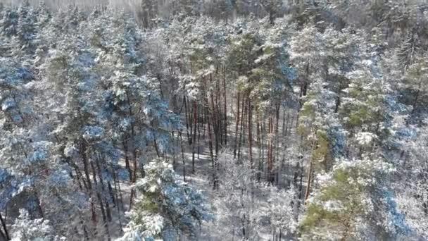 Nádherný zimní les. Stromy jsou pokryty sněhem a mrazem. Pohled z verdu na les. Let mezi stromy.