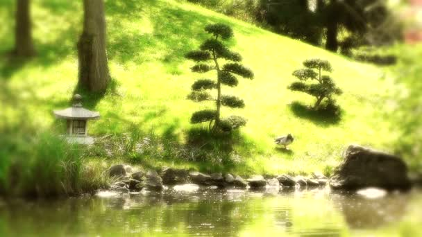 Japonská zahrada na jaře