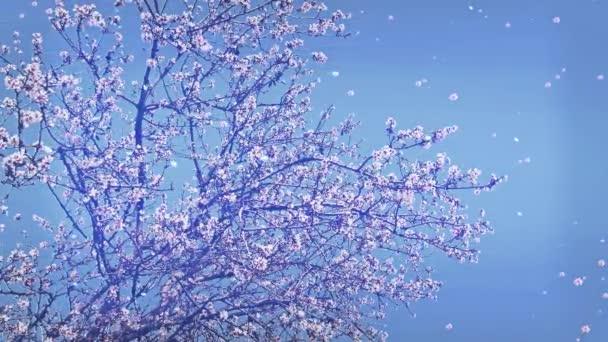 Kvetoucí stromy, květy a lístky, které spadají