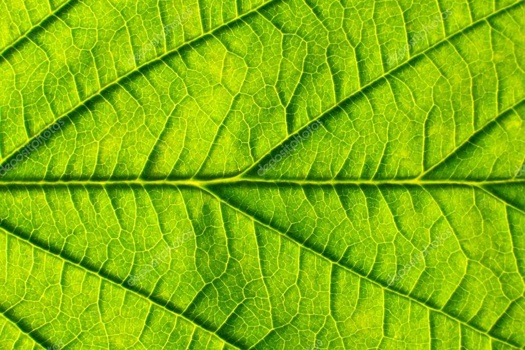 Green leaf. Background abstract nature.