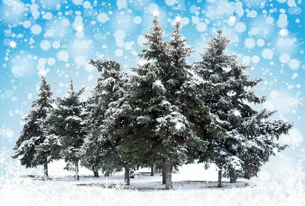 Christmas Trees on nature background