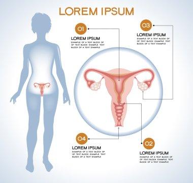 Ovaries. Modern medical infographics.