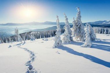 magical winter snow covered tree. Carpathians. Ukraine, Europe