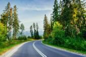 La strada conduce attraverso i boschi di montagna