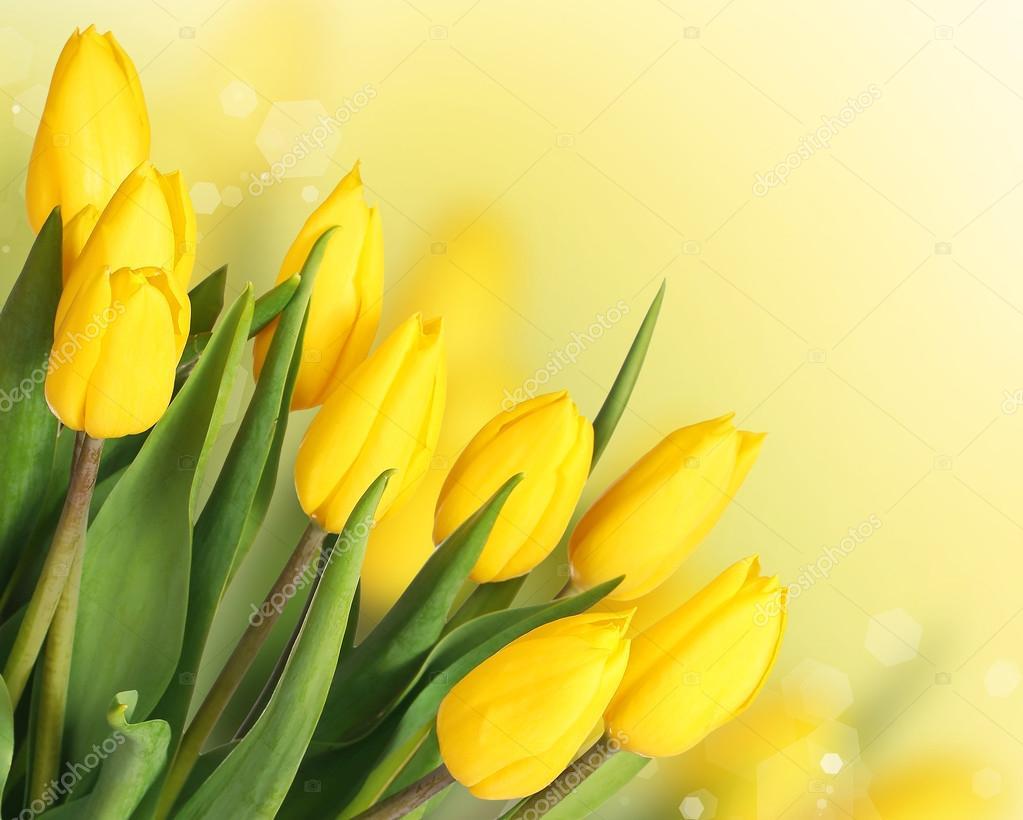 Imagenes Flores Tulipanes Amarillos Flores De Primavera Ramo De