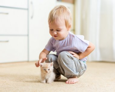 Toddler kid boy playing with kitten in children room