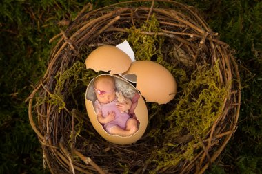 Newborn baby in bird's nest