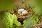 Modré vejce v hnízdě