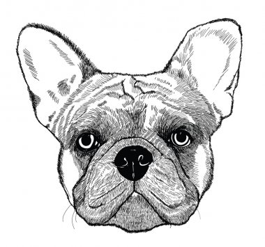 French bulldog, vector dog illustration
