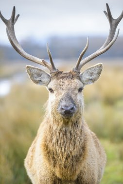 Deer at Salburua park, Vitoria (Spain) stock vector