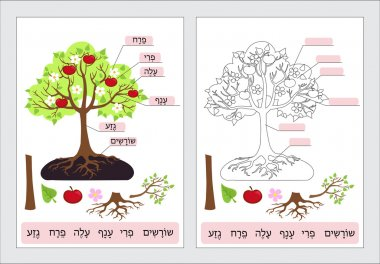 Parts of Tree.Clipart. Tree structure trunk, root, branch, fruit, leaf, root. Work page for students. Vector illustration.